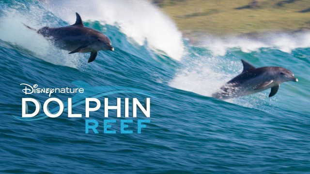 29 - Películas infantiles - Dolphin Reef