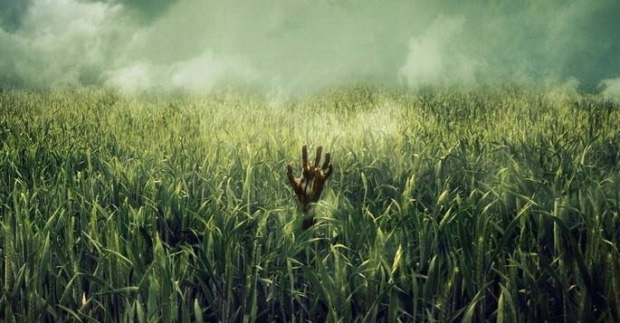 In the tall grass Películas Terror Netflix